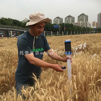 小麦株高测量仪