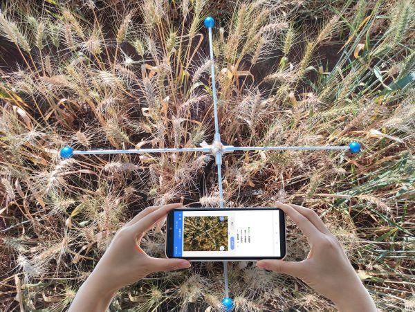 小麦亩穗数测量系统